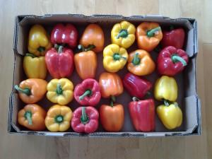 Using fresh peppers enhances seasonal traditions