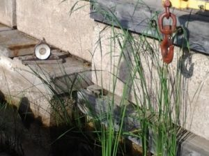 A clock without hands on a disused dock with a hoist hook dangling above and some reeds growing in the water below.